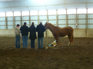 Teamwork, developing a plan for success with their horse partner, 2012, Horseplay