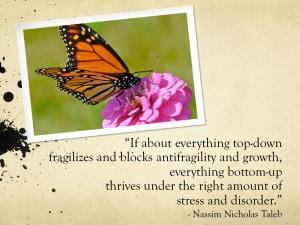 Anti-fragile quote