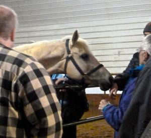 Horse greeting at Maple Ridge Farm, Holly, Michigan 2014